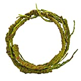 Niteangel Flexible Jungle Vines, Natural Habitat Decor for Lizard, Frogs, Snakes and Other Reptiles