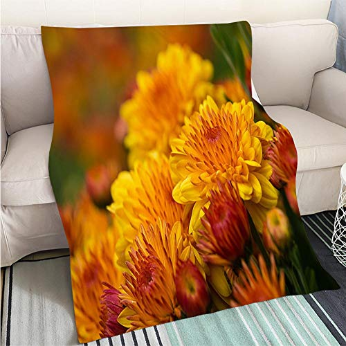 BEICICI Art Design Photos Cool Quilt Autumn Mums or Chrysanthemums in Bloom Living Room/Bedroom Warm Blanket
