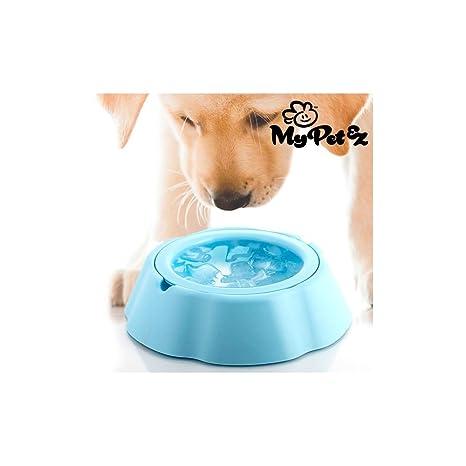 My Pet Ez Bebedero para Mascotas - 1 Unidad: Amazon.es: Productos ...