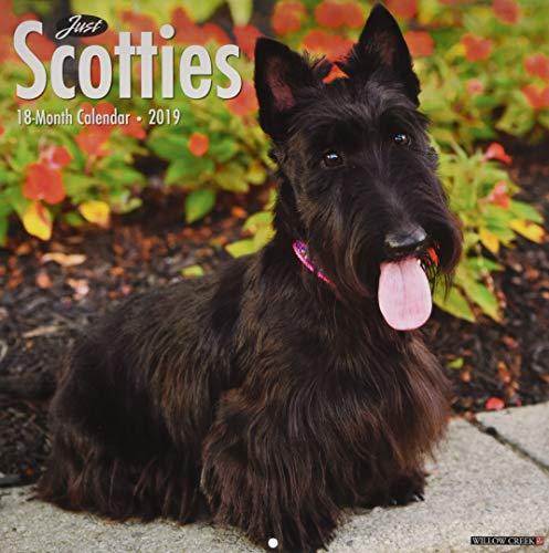 Just Scotties 2019 Wall Calendar (Dog Breed Calendar) ()