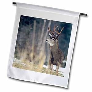Danita Delimont - Deer - Mule deer, winter near Bigfork Montana - US27 CHA1374 - Chuck Haney - 12 x 18 inch Garden Flag (fl_91767_1)