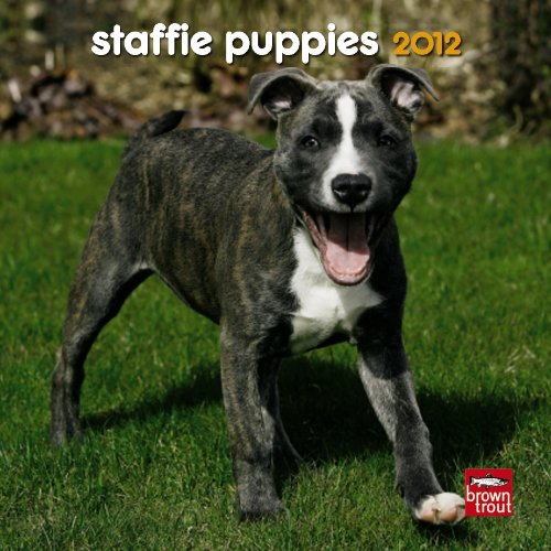 Staffordshire Bull Terrier Puppies 2012 7X7 Mini Calendar ebook