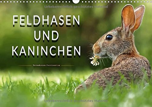 Feldhasen und Kaninchen (Wandkalender 2018 DIN A3 quer): Eindrucksvolle Bilder der scheuen Tiere. (Monatskalender, 14 Seiten ) (CALVENDO Tiere)