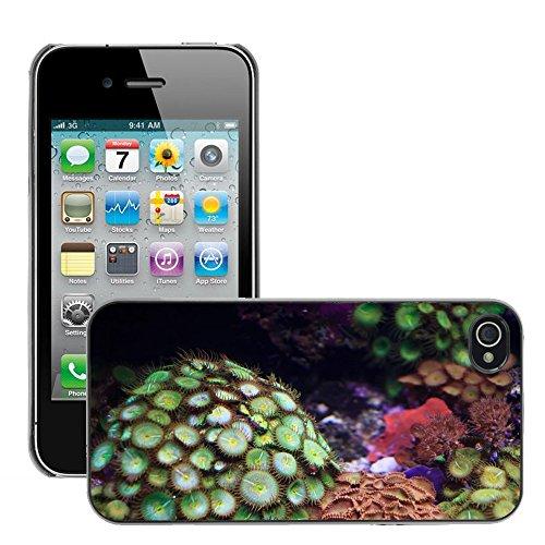 Bild Hart Handy Schwarz Schutz Case Cover Schale Etui // M00133887 Anemone Tierkolonie Colorful Coral // Apple iPhone 4 4S 4G