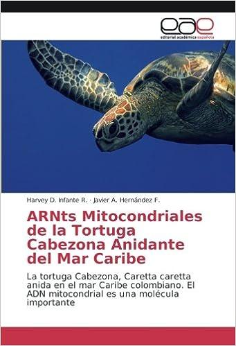 ARNts Mitocondriales de la Tortuga Cabezona Anidante del Mar Caribe: La tortuga Cabezona, Caretta caretta anida en el mar Caribe colombiano.