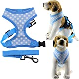 Bolbove Pet Adjustable Lovely Dots Mesh Harness and Leash Set for Cats & Small Dogs (X-Small, Blue)