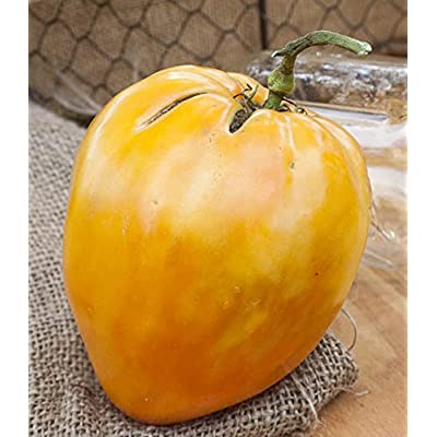 Orange Oxheart Heirloom Tomato Premium Seed Packet : Garden & Outdoor