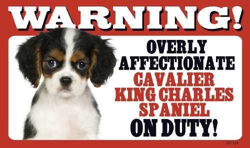 Warning Overly Affectionate Cavalier King Charles Spaniel On Duty