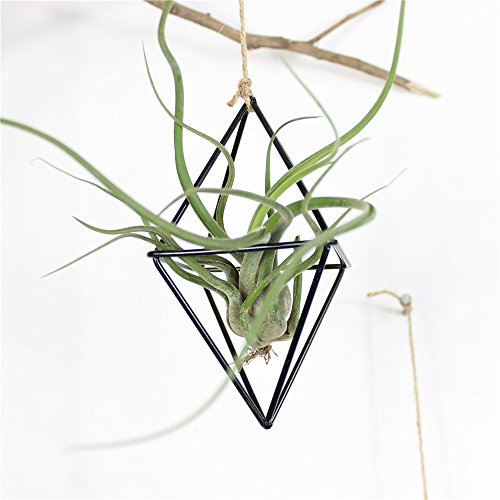 Rustic Style Hellow Freestanding Hanging Double Diamond Shaped Metal Tillandsia Air Plants Rack Holder 3.5 inches Sides x 5.9inches Height (Black) No Plants