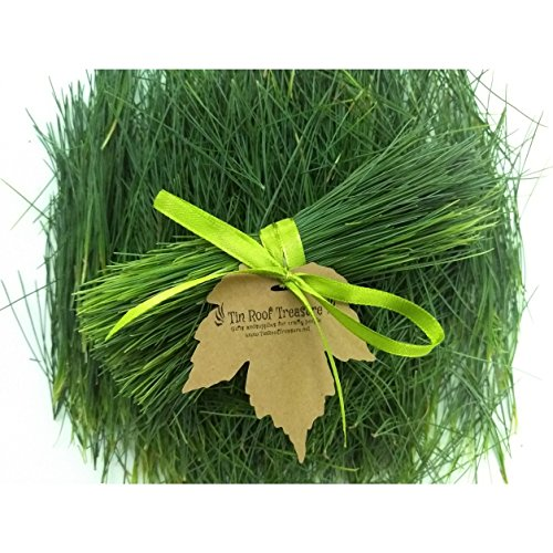 Tin Roof Treasure Fresh Eastern Pine Needles, 1/2 Pound