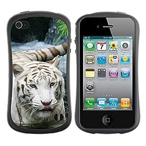 Suave TPU GEL Carcasa Funda Silicona Blando Estuche Caso de protección (para) Apple Iphone 4 / 4S / CECELL Phone case / / Tiger Snow White Nature Indian African Furry /
