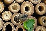 EXQUIS HOME Garden Bee House Outdoor Garden Decor