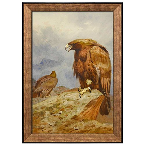 Beautiful Illustration of a Hawk by Archibald Thorburn Framed Art
