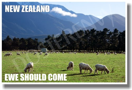 New Zealand - Ewe Should Come - NEW World Travel Poster