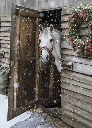 Avanti 10-Count Blank Christmas Notecards with Envelopes, The Horse from Snowy Farm (Horse Cards Xmas)