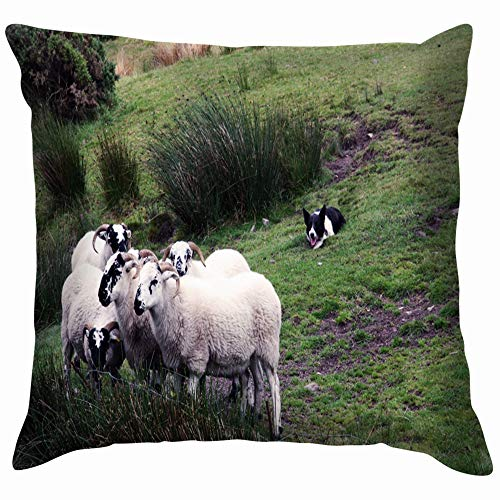 Sheepdog Herding Sheep Animals Wildlife Agriculture Nature Pillow Case Throw Pillow Cover Square Cushion Cover 20X20 Inch