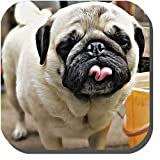 Funny Bizness 6 Individual Pugs Artistic Portraits Adorable, Wrinkly Cuddly Dogs Set of 6 Different Drink Coasters