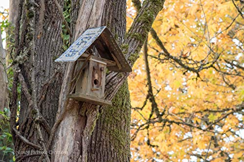 Rustic Bird House Decor Rhode Island License Plate Weathered Wood Photography Unframed Autumn Leaves Nature Photo Gray Brown Gold Wall Art Picture 5x7 8x10 8x12 11x14 12x18 16x20 16x24 20x30 24x36