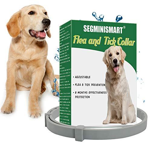 🥇 Collar Antiparasitario para Perros