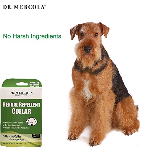 Dr. Mercola Herbal Repellent Collar For Large Dogs with Natural Active Ingredients, Long-lasting Flea Prevention - Odorless, Safe and Waterproof Flea Collars Effective Up To 4 Months, Necks up to 27'' by Dr. Mercola (Image #2)'