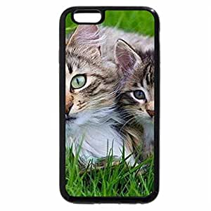 iPhone 6S / iPhone 6 Case (Black) cat and kitty