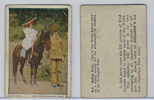 (V67 Neilson's Chocolate, Wild Animals, 1930's, B5 Riding Pony)