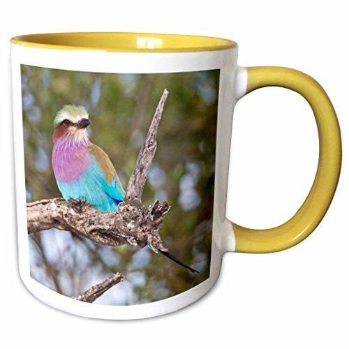 3dRose Danita Delimont - Birds - Tanzania. Lilac-breasted Roller, Tarangire NP-AF45 RBE0183 - Ralph H. Bendjebar - 11oz Two-Tone Yellow Mug (mug_70509_8) - Lilac Breasted Roller