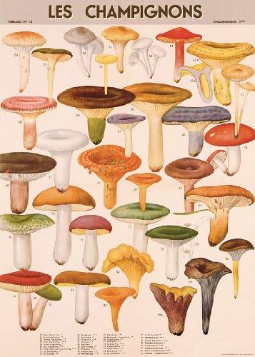 cavallini-decorative-paper-mushrooms-20x28-sheet