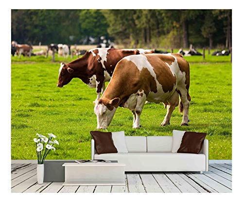 wall26 - Cows on Meadow.Grazing Calves - Removable Wall Mural | Self-Adhesive Large Wallpaper - 66x96 inches