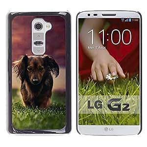 PC/Aluminum Funda Carcasa protectora para LG G2 D800 D802 D802TA D803 VS980 LS980 Dachshund Little Brown Dog Longhair Grass / JUSTGO PHONE PROTECTOR