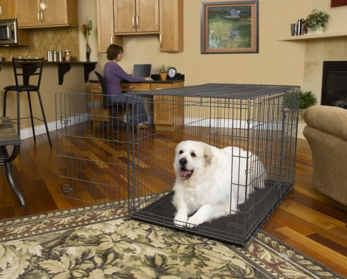 What Size Dog Crate Should I Get For A Husky