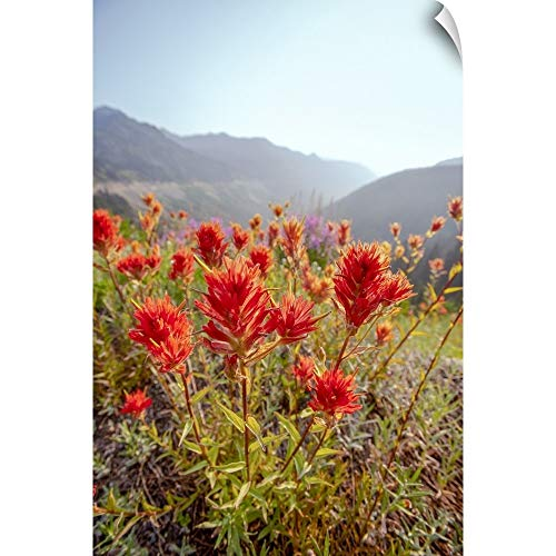 CANVAS ON DEMAND Scarlet Paintbrush, Mount Rainier National Park, Washington Wall Peel Art Print, 20