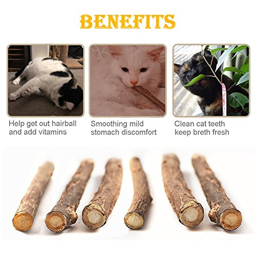 Catnip Toys, Cat Teeth Grinding Chew Toys Set - 3 Refillable Catnip Fish, 6 Catnip Matatabi Chew Sticks, 2 Squeaky Mouse, with Extra Catnip for Refill, Best for Cat, Puppy, Kitty, Kitten, Ferret by RIO Direct (Image #4)