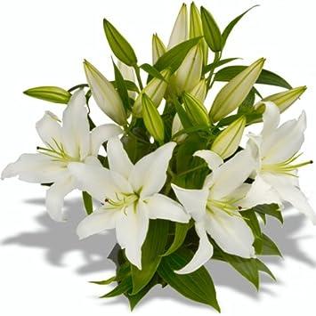 Blumenstrauß \