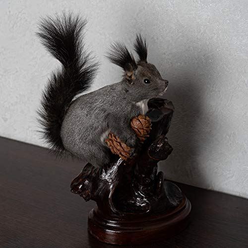 (Gray Squirrel Taxidermy Mount - Grey Squirrel Mounted, Stuffed Animals for Sale - Real, Decor, LIFESIZE -)