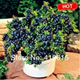 buy 100 seeds/pack Blueberry seeds Bonsai Edible fruit seed, Indoor, Outdoor Available now, new 2018-2017 bestseller, review and Photo, best price $1.90