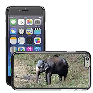 Hot Style Cell Phone PC Hard Case Cover // M00308127 Elephant Tamed Indian Animal // Apple iPhone 6 4.7""