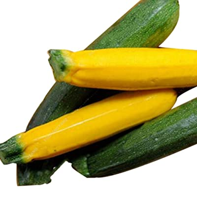 Bravet Vegetable Seeds - 20pcs Zucchini Seeds Colorful Annual Planting Vegetables Seeds for Home Garden Bonsai : Garden & Outdoor