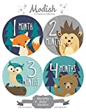 12 Monthly Baby Stickers, Woodland Baby Month Stickers - Best Reviews Guide
