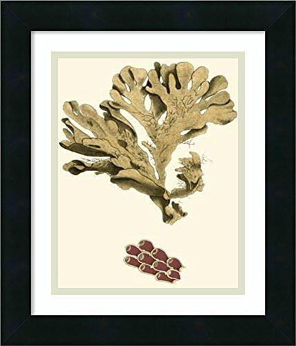 Framed Art Print 'Jewels of the Sea I' by Frederick P. Nodder - Nodder Jewels