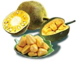 Fresh Whole Jackfruit from Jiro's Garden, Sweet, Exotic, Tropical,...