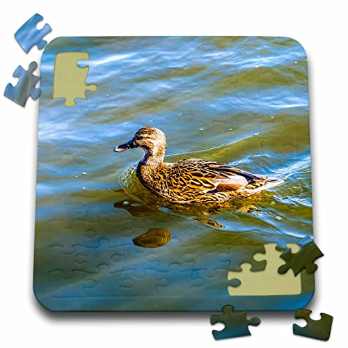 3dRose Alexis Photography - Birds - Female mallard duck swims in a cold water on a sunny spring day - 10x10 Inch Puzzle (pzl_285814_2) ()