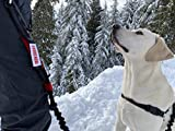 IRON DOGGY Runner's Choice Hands-Free Dog Leash