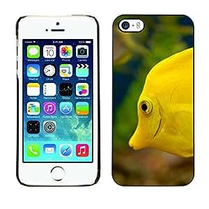 X-ray Impreso colorido protector duro espalda Funda piel de Shell para Apple iPhone 5 / iPhone 5S - Yellow Sea Underwater Life Green