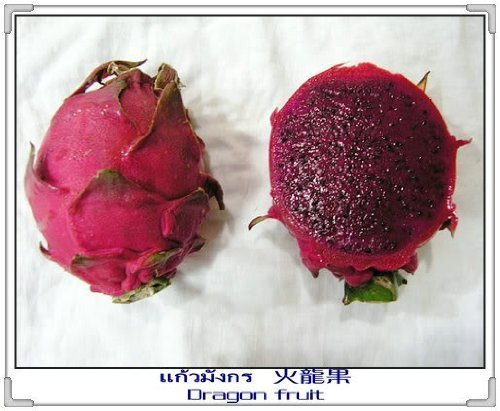 20 PURPLE DRAGON FRUIT (Pitaya / Pitahaya / Strawberry Pear) Hylocereus Undatus Cactus Seeds by Seedville
