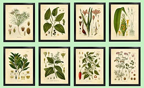 Ink Inc. Classic Common Kitchen Spices Vintage Botanical Art Prints - Set of 8 - Black Pepper, Bay Leaf, Cumin, Cayenne Pepper, Coriander, Cinnamon - 5x7 Unframed