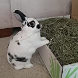 Small Pet Select 2nd Cutting Timothy Hay Pet