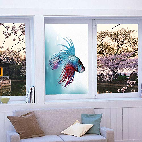 YOLIYANA Vinyl Non Adhesive Privacy Film,Aquarium,for Any Places: Kitchen, Bedroom,Siamese Fighting Betta Fish Swimming in Aquarium Aggressive,24''x36''