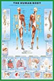 "Empire 266941 Educational Poster ""The Human Body"" / Print 61 x 91.5 cm"