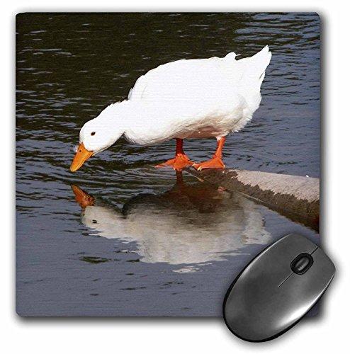 3dRose LLC 8 x 8 x 0.25 Inches Mirror Mirror, White Duck Mouse Pad (mp_11533_1)